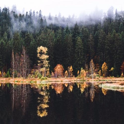 Zauberhafter Schwarzwald