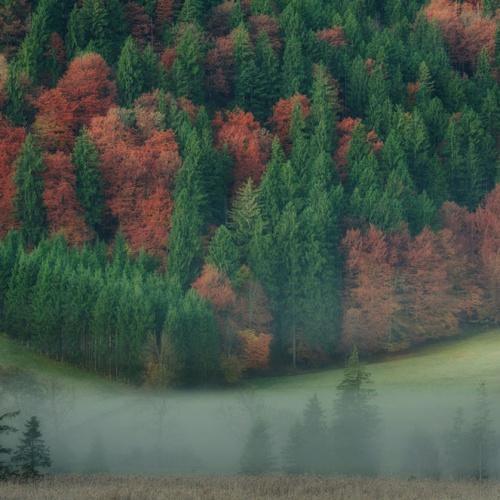 Sobre bosques y árboles