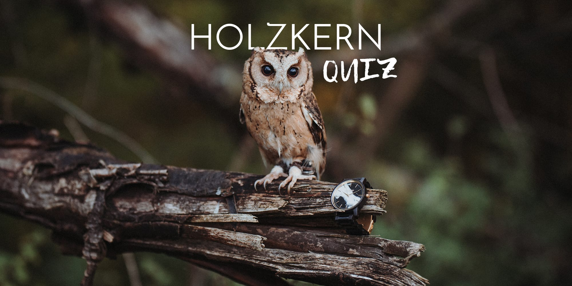The Great Holzkern Owl Quiz
