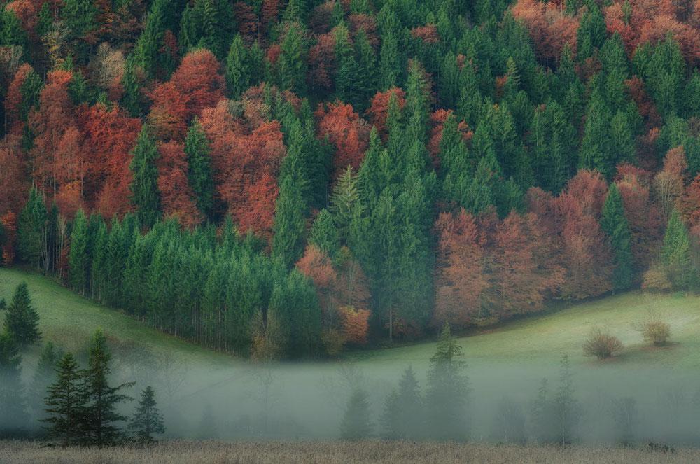 Faszination Wald und Bäume