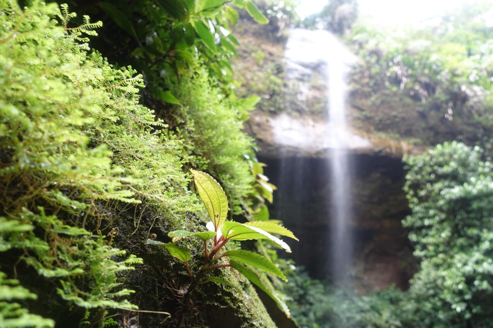 Kolumbien Wildnis