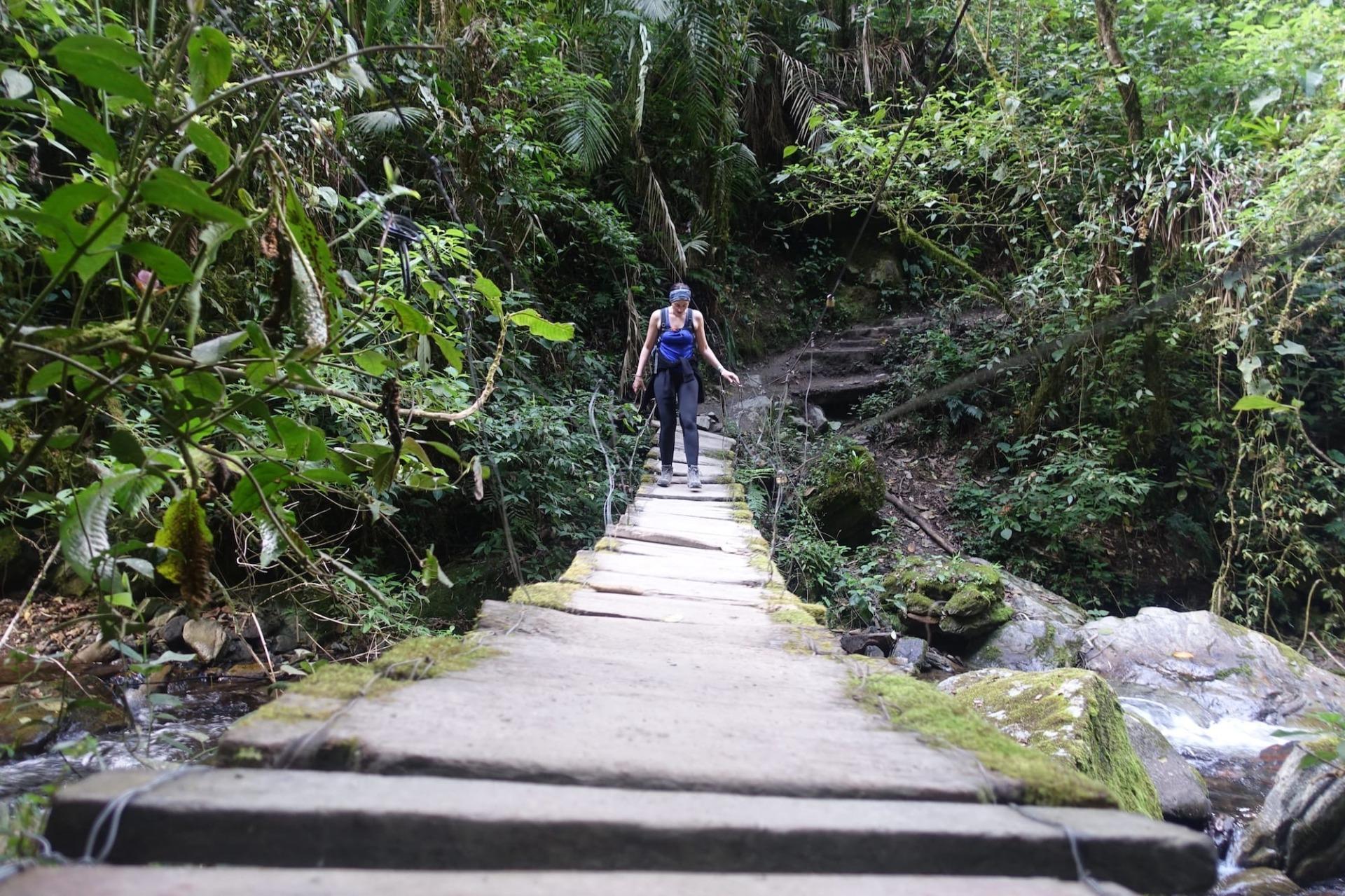 Brücke Urwald