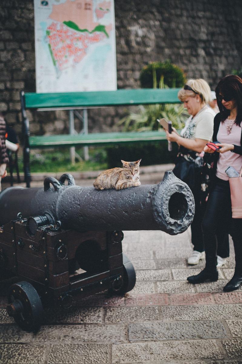 Kanone mit Katze