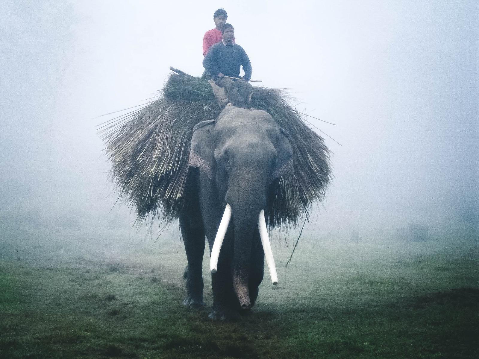Menschen auf Elefant