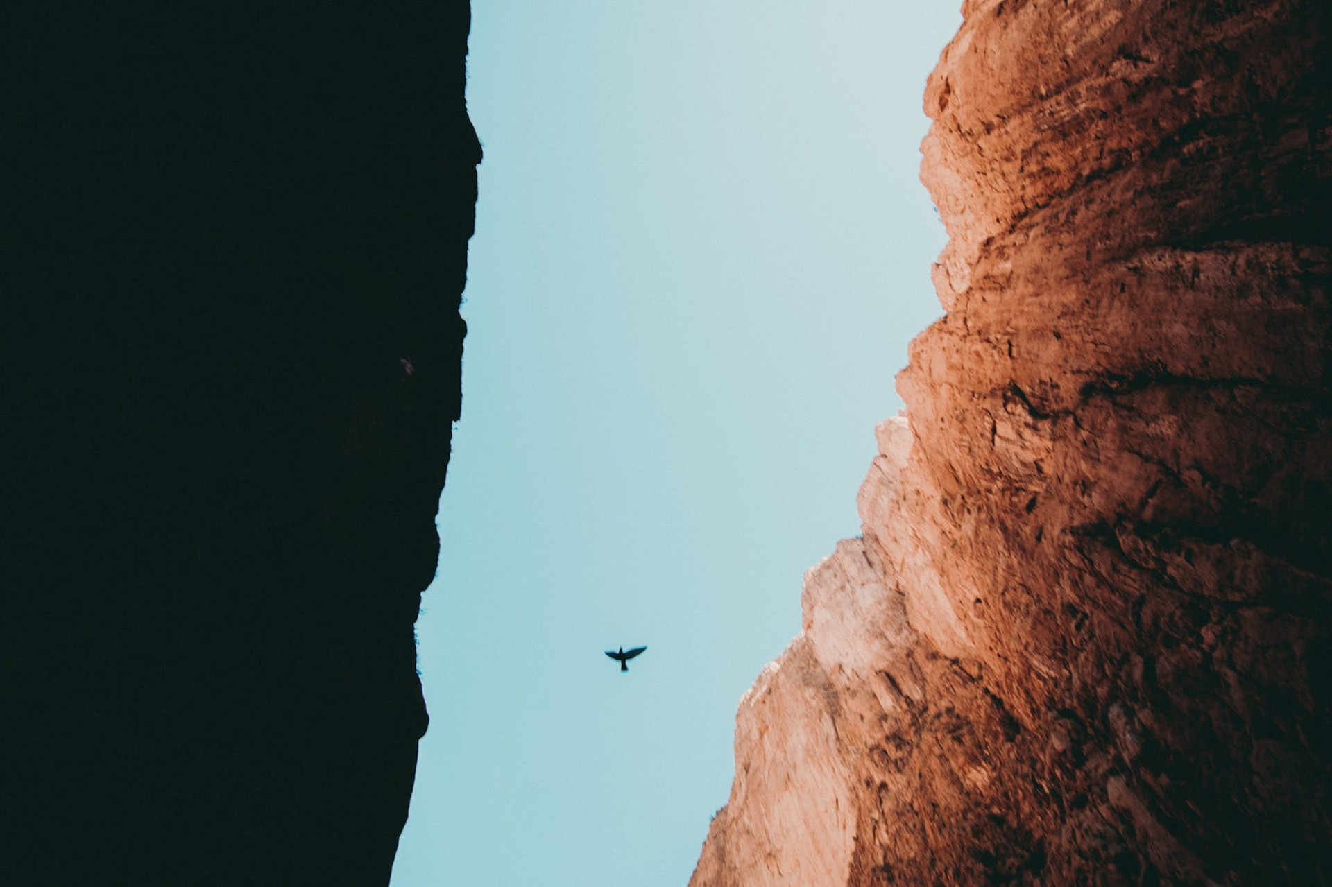 Vogel in Schlucht